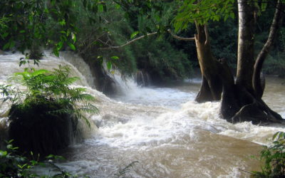 Are dams killing the Mekong river?